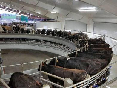 There are many different milking parlor designs being used today. The advances are great. Stanchion, herringbone, rotary, carousel and even robotic milkers.