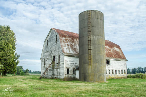 Barns have changed over the years from beautiful old barns with silos and grain elevators to modern day flat barns with open air and curtains.