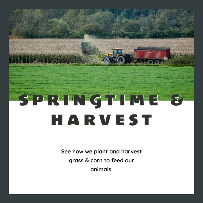 Springtime and Harvest